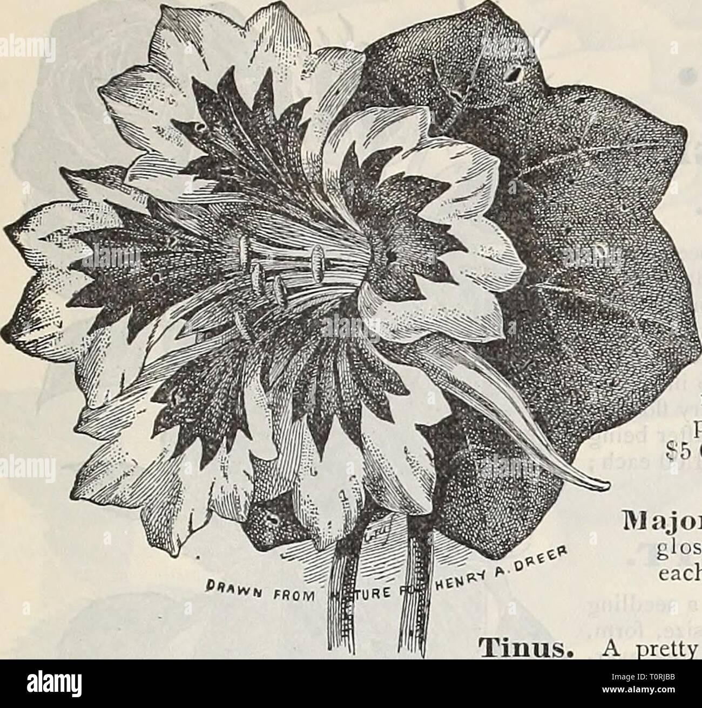 Sju Calendar.Dreer S 1901 Garden Calendar 1901 Dreer S 1901 Garden Calendar