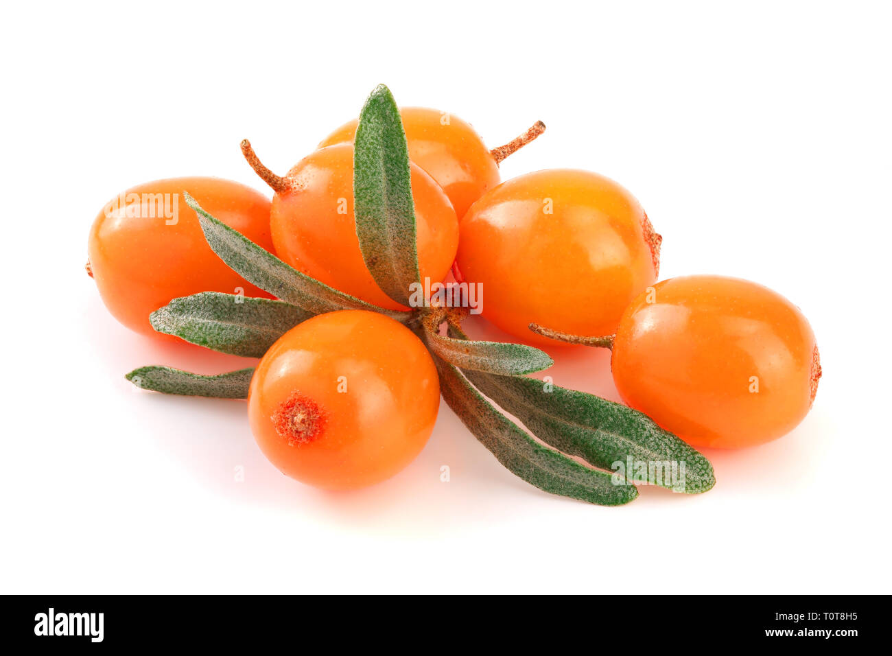 Sea buckthorn. Fresh ripe berry with leaves isolated on white background macro. Stock Photo