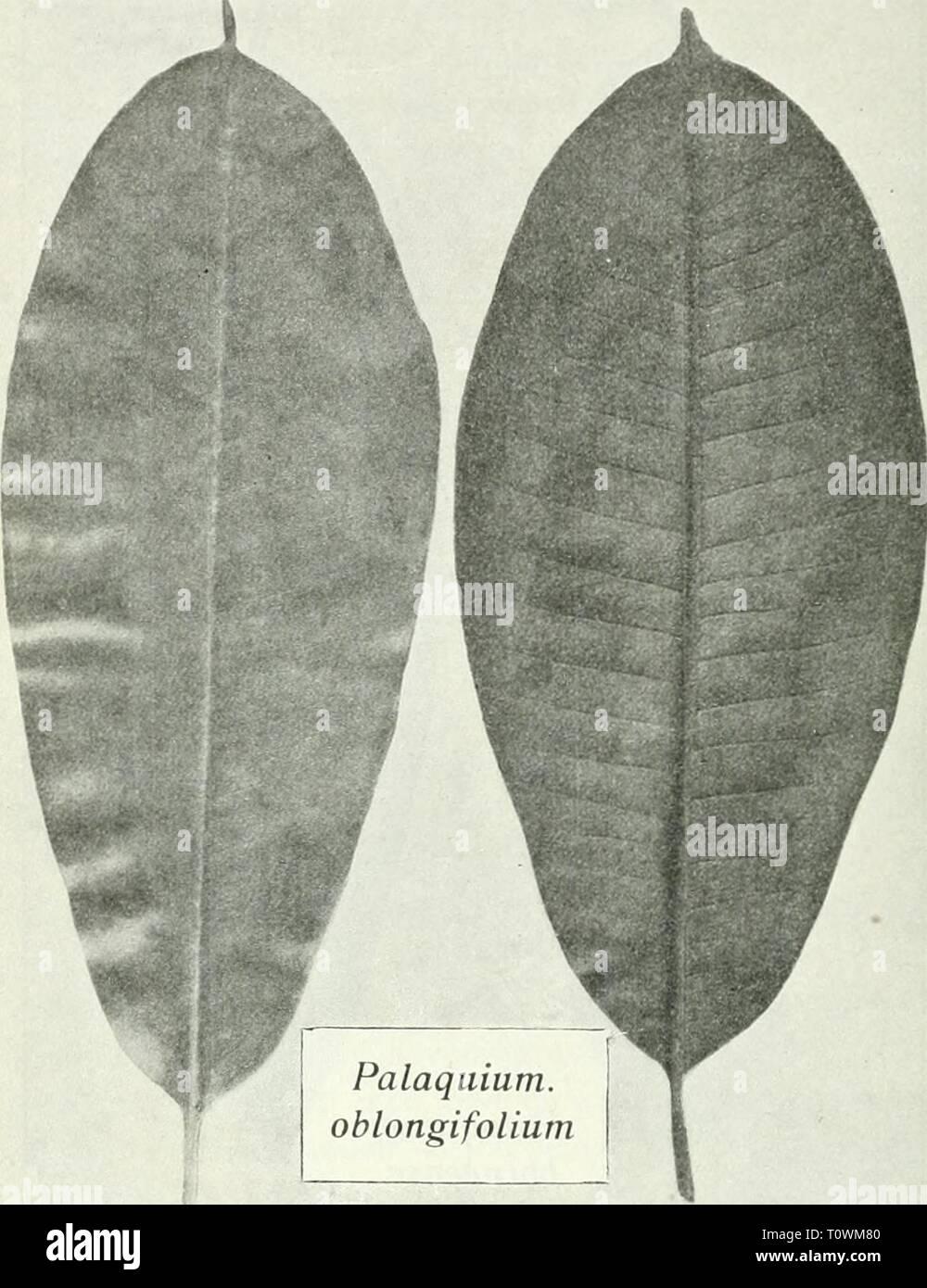 Dr KW van Gorkom's Oost-Indische Dr. K.W. van Gorkom's Oost-Indische cultures. Opnieuw uitg. onder redactie van H.C. Prinsen Geerligs. [Door J.P. van der Stock et al.]  drkwvangorkomsoo03gorkuoft Year: 1917  848 plaats van zaden kan men ook jonge planten uit de bosschen van Borneo en Sumatra gebruiken, die in den vorm van stumps lange reizen kunnen    Fig. 255- maken, echter na het uitplanten zeer veel zorg' vereischen. Liefst in het begin van den regentijd worden de jonge planten - Stock Image