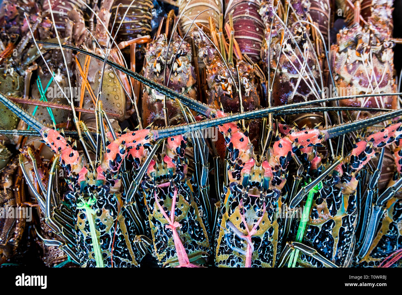 Asian lobster, for sale at the fresh seafood market in Kota Kinabalu, Sabah, Borneo, Malaysia. - Stock Image
