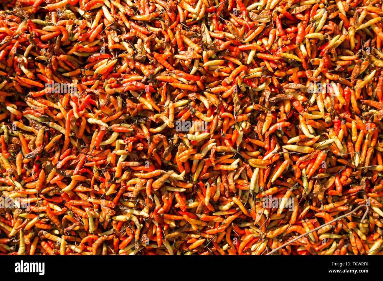 Fresh chili peppers, laid out in the setting sun at a vegetable market in Kota Kinabalu, Sabah, Borneo, Malaysia. - Stock Image