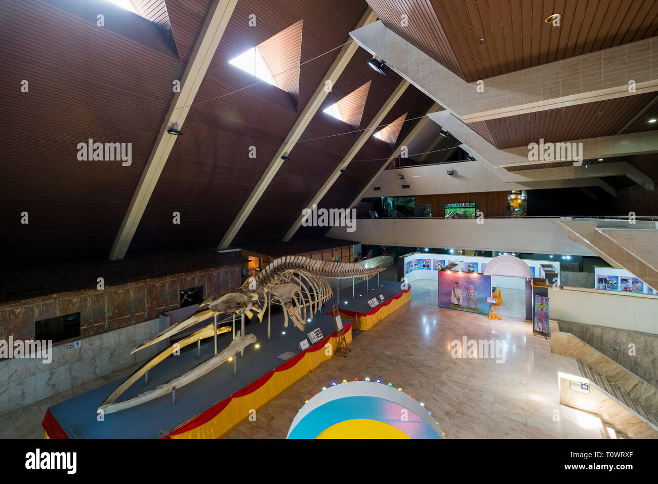 Exhibits at the Sabah State Museum in Kota Kinabalu, Sabah, Borneo, Malaysia. A giant white whale skeleton dominates the main interior space. - Stock Image