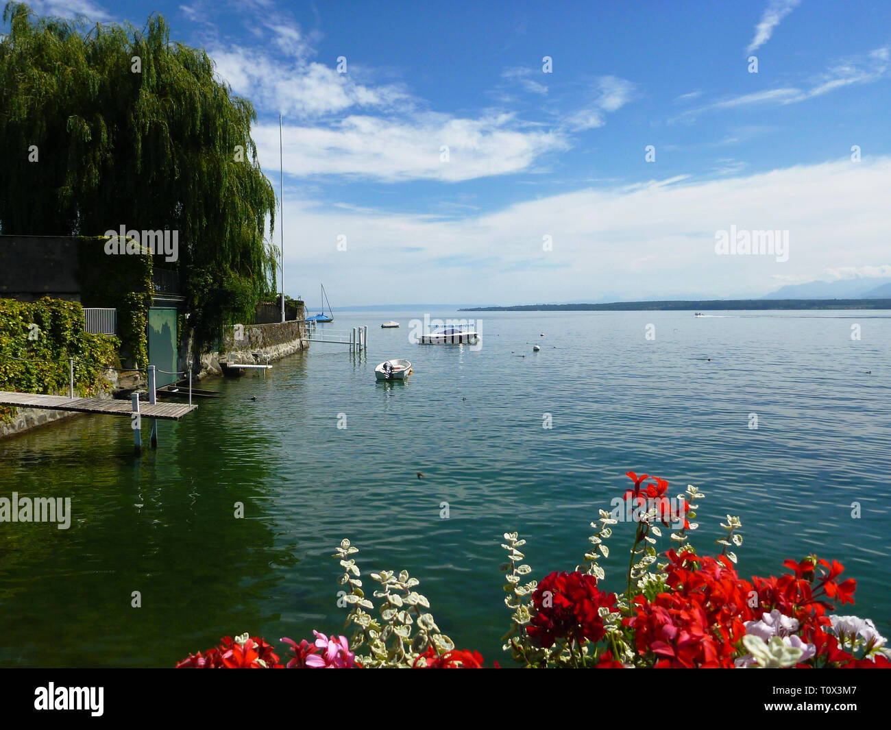 Summer scene on Lake Leman with Geraniums. Boats on the lake - Stock Image