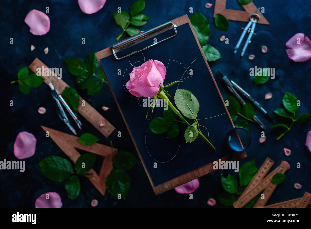 Rose flower with blueprint lines on a wooden clipboard with pencils, rulers, and compasses around. Nature and geometry conceptual flat lay - Stock Image