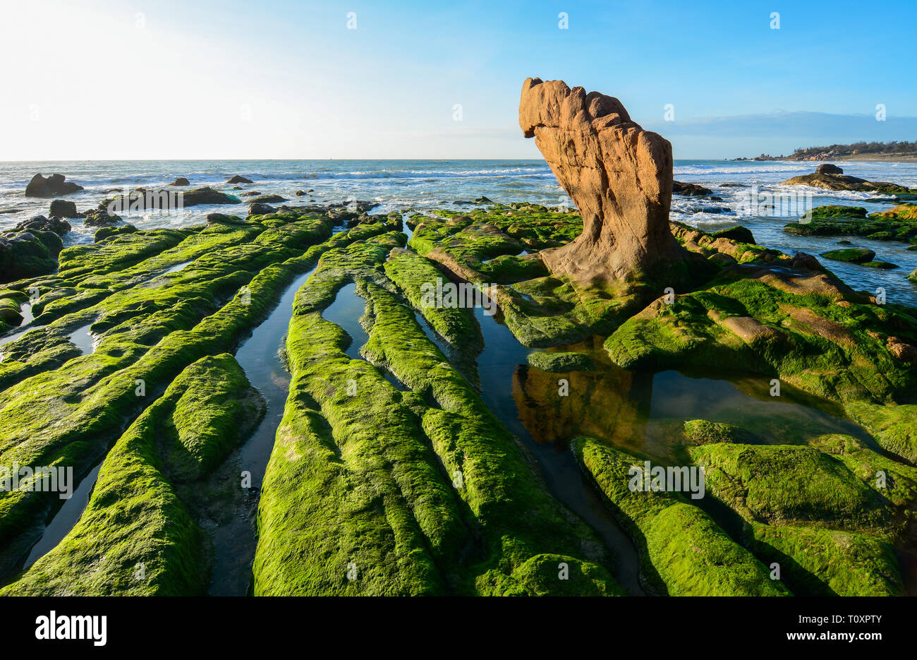 Green algae on a rock in the middle of the sea. South China Sea in Vietnam. - Stock Image