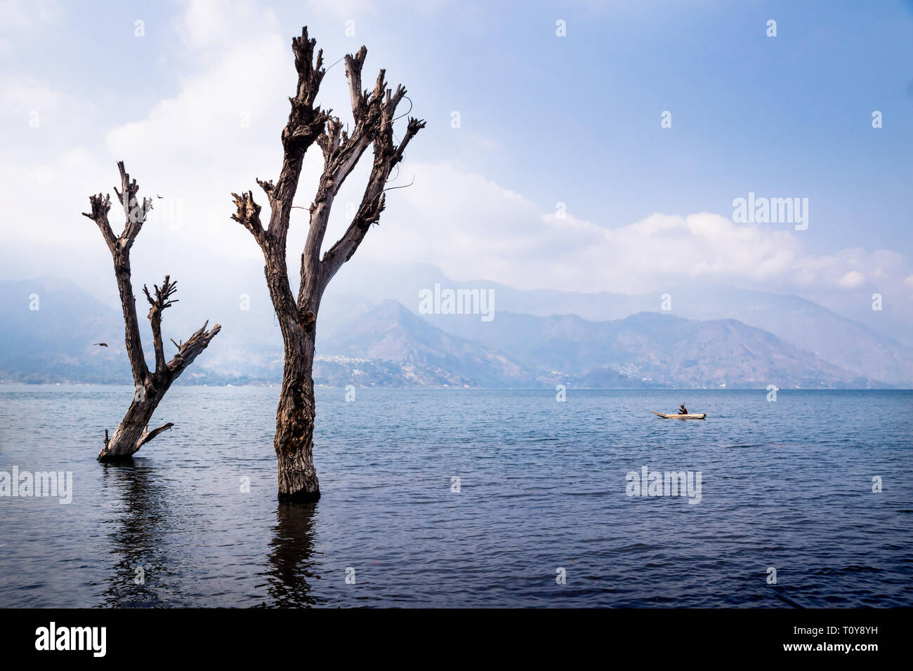 Dead tree with reflection in lake atitlan with boat and mountain range, San Pedro, Guatemala - Stock Image