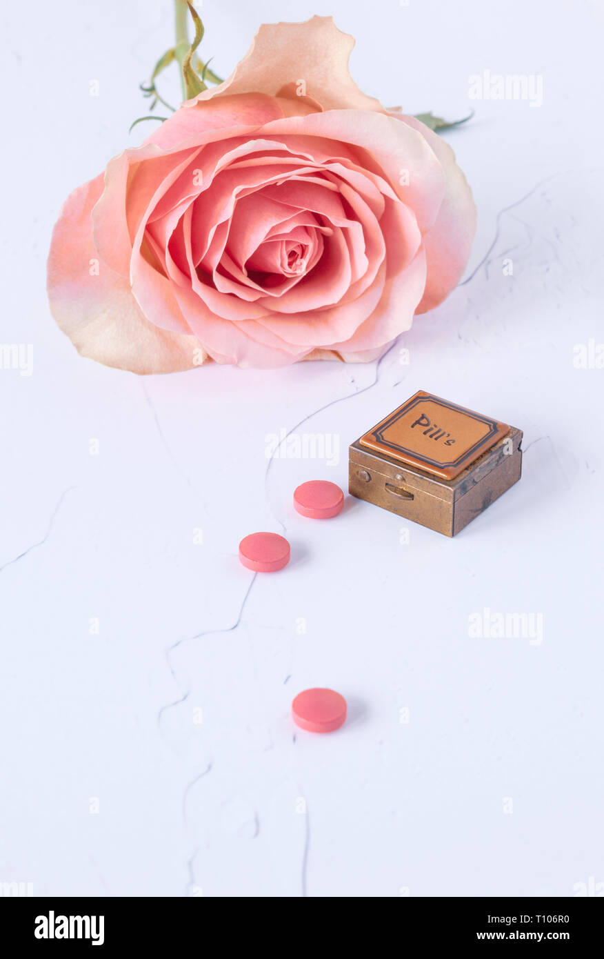 One pink rose with pillbox on white paint background Stock Photo