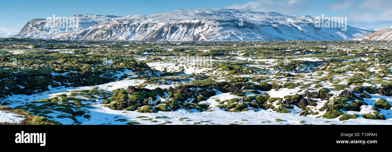 Panoramic image of the lava field of Skaftareldahraun, winter in Iceland, Europe - Stock Image