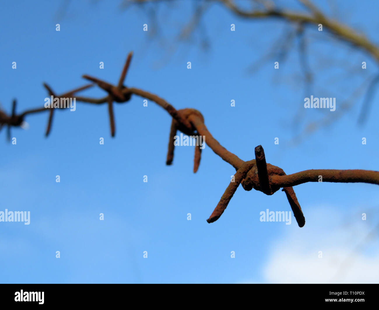 Rusty barbed wire on background of blue sky with clouds and bare branches. Concept of boundary, prison, freedom, immigration in spring, military camp - Stock Image