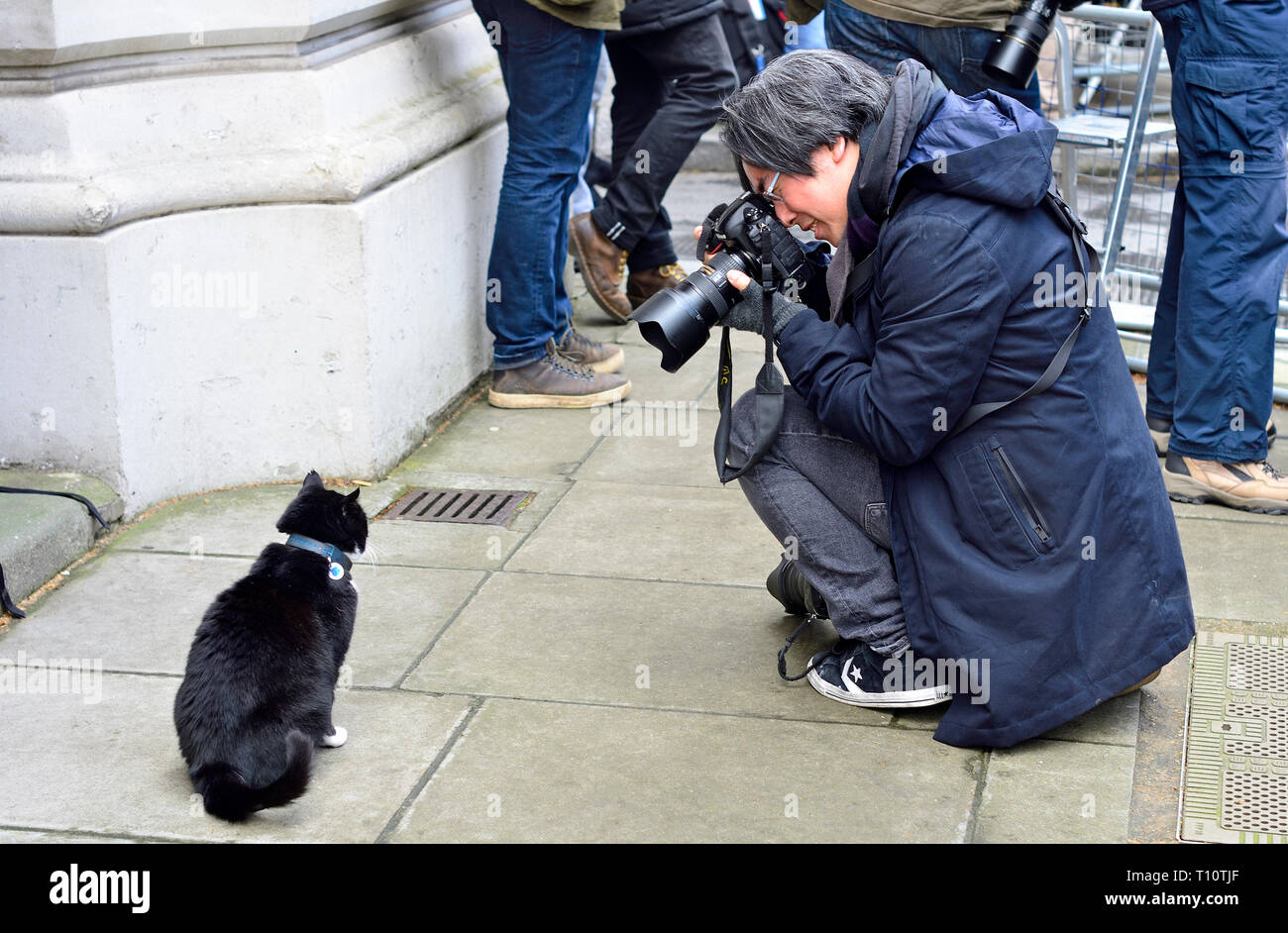 Palmerston - chief Mouser to the Foreign Office - being photographed (by Justin Ng) in Downing Street, Westminster, Feb 2019 - Stock Image