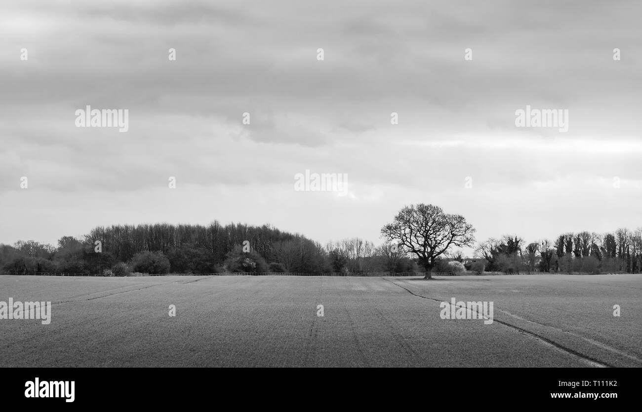 Moody rural scene with ploughed field and oak tree on horizon at dawn in Beverley, Yorkshire, UK. - Stock Image