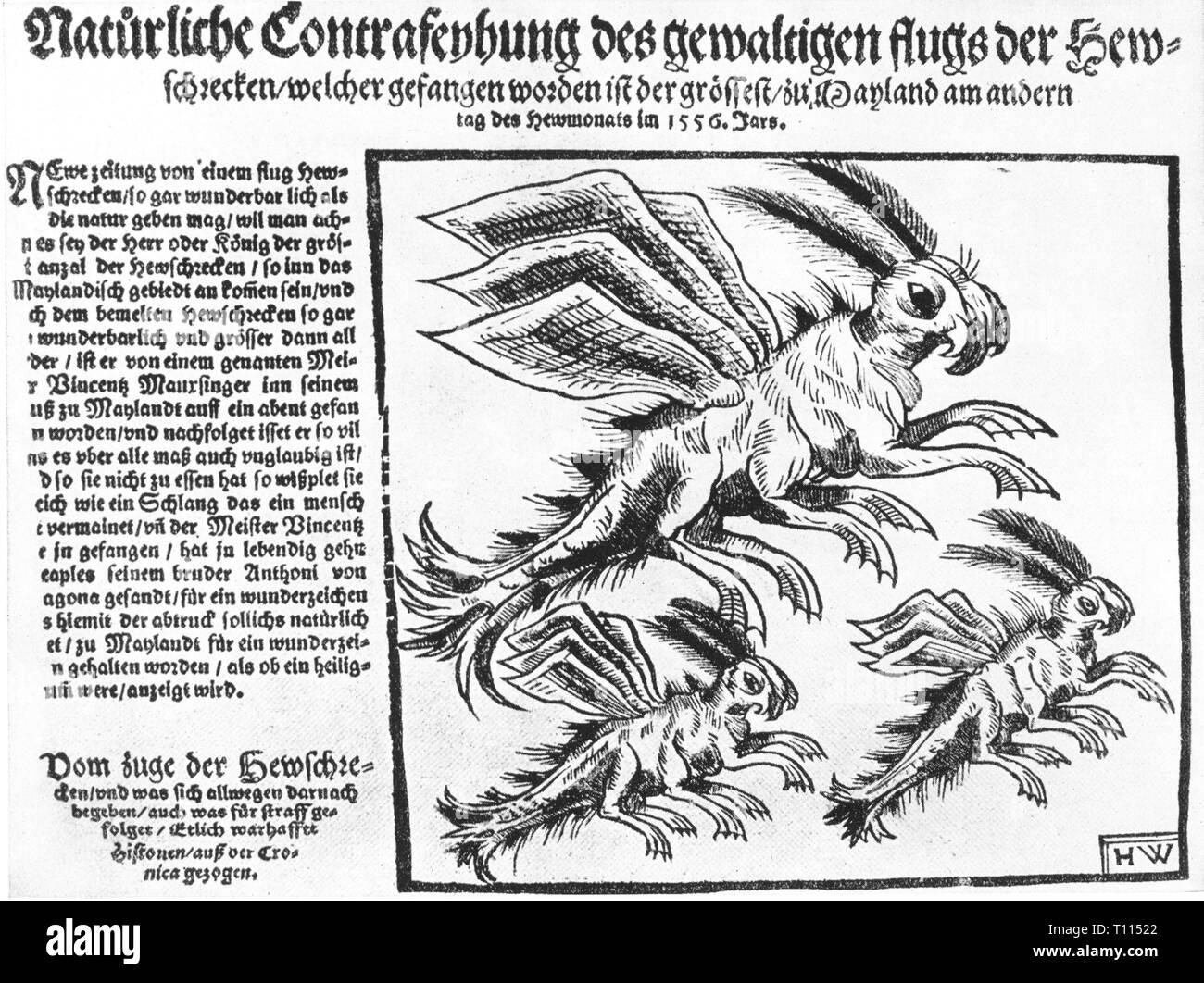 press / media, magazines, 'Natuerliche Contrafeyhung des gewaltigen flugs der Heswchrecken' (Natural image of the giant locust flight), front page, woodcut by HW, Nuremberg, 1556, Artist's Copyright has not to be cleared - Stock Image