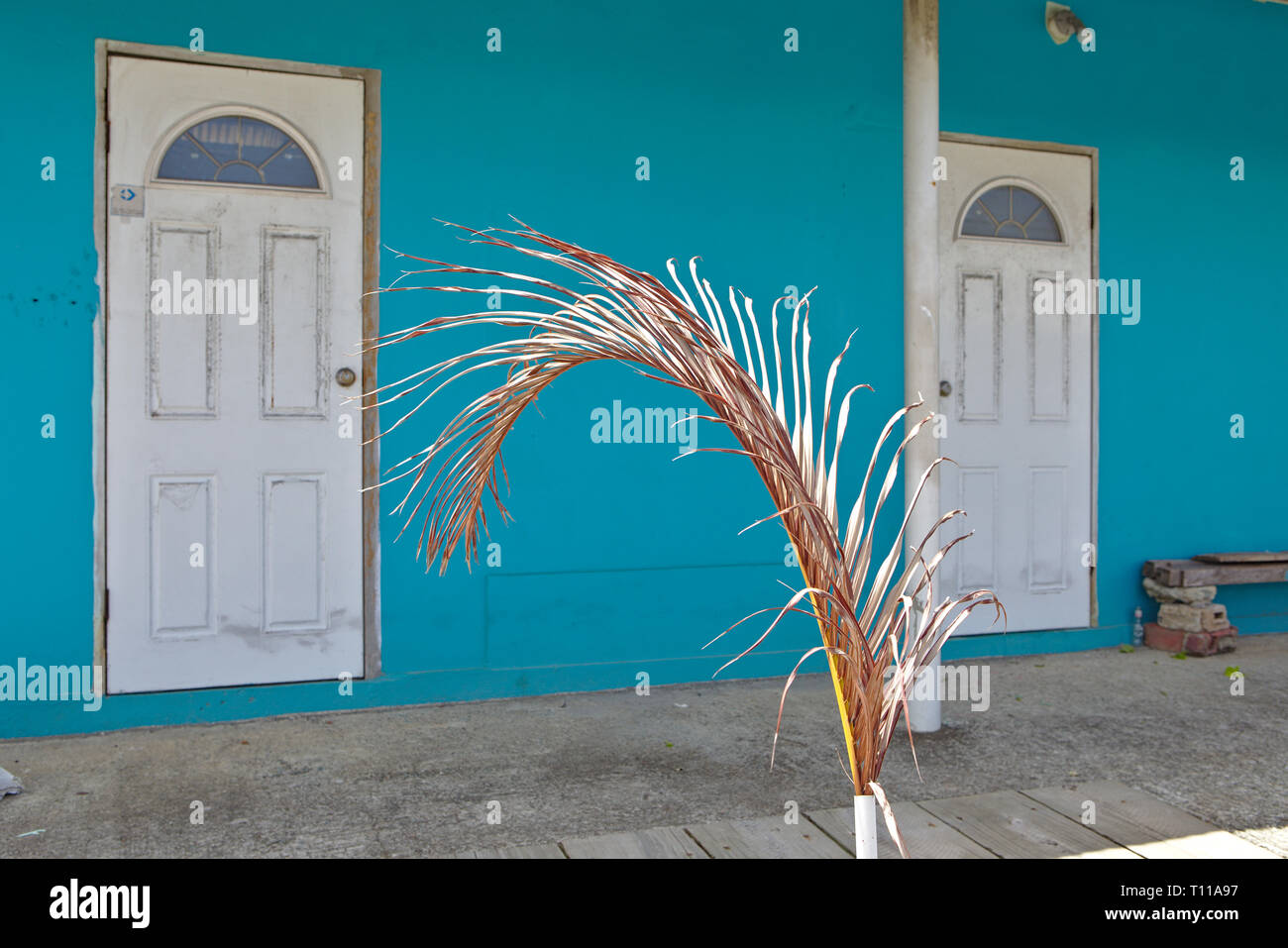 two white doors against a turquoise cyan wall with a palm frond - Stock Image