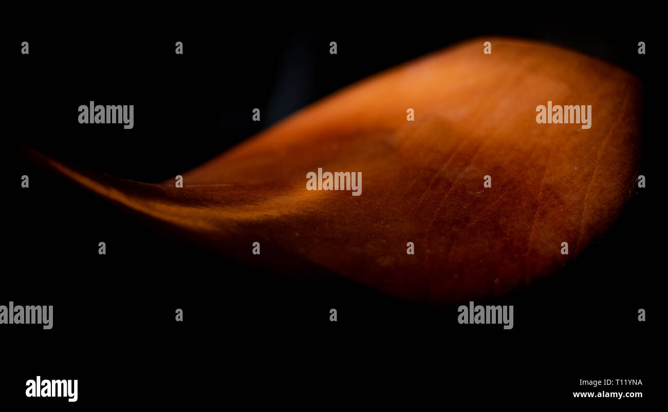 My old riding saddle lit with a single strobe - Stock Image
