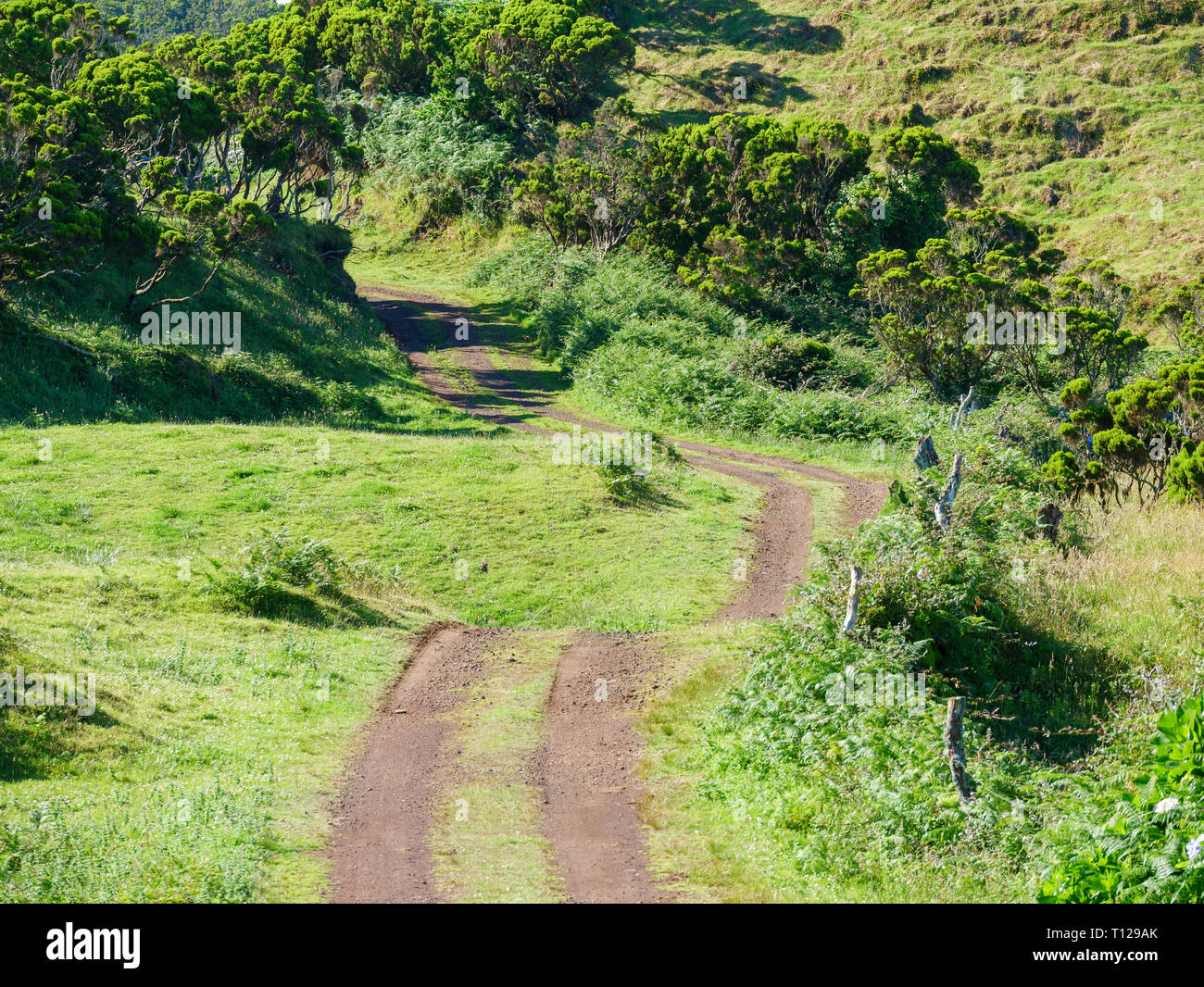 a track across the fields leading to a vanishing point in the image center on the island of Azores Portugal Europe - Stock Image