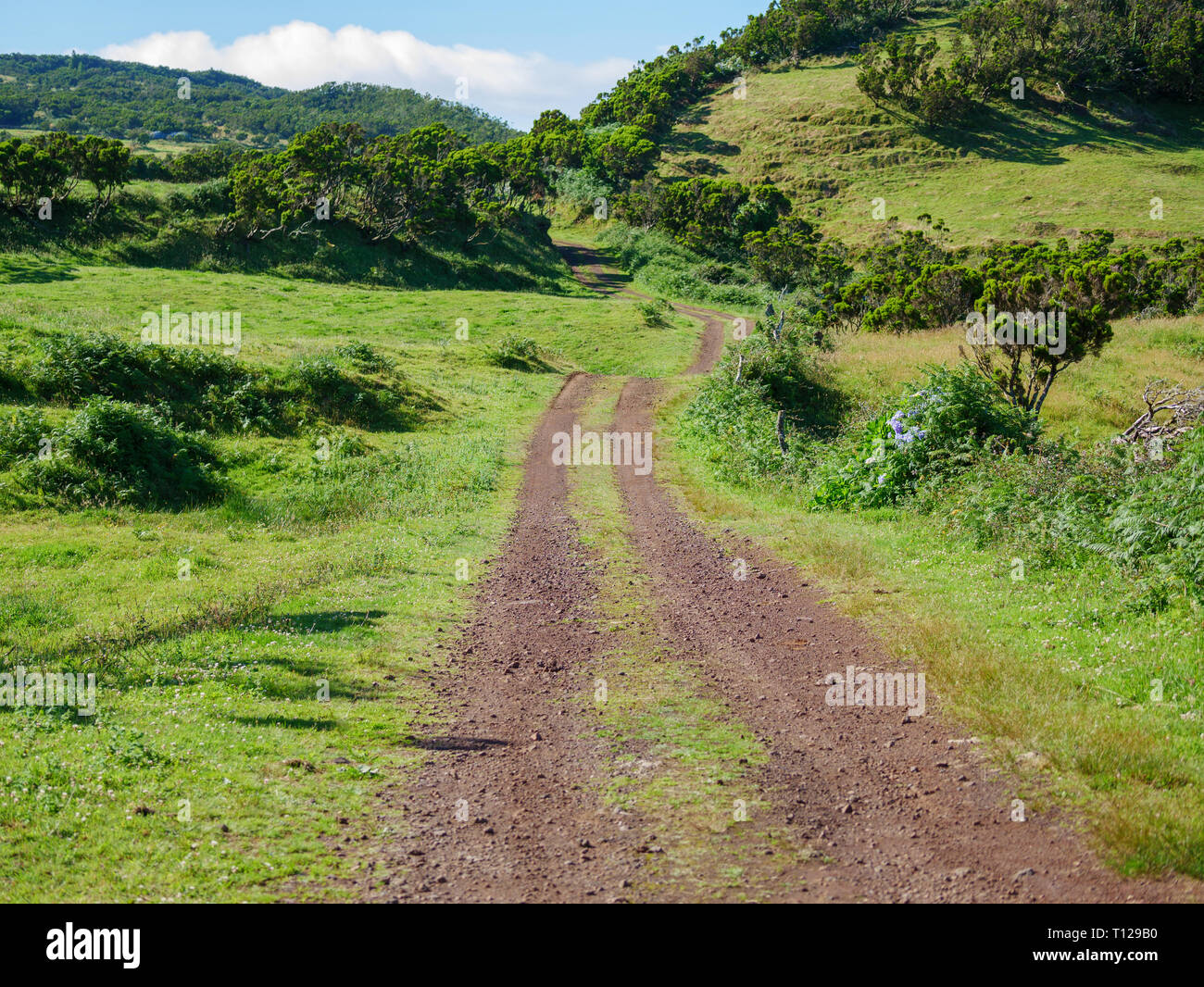 Image of a track across the fields leading to a vanishing point in the image center - Stock Image