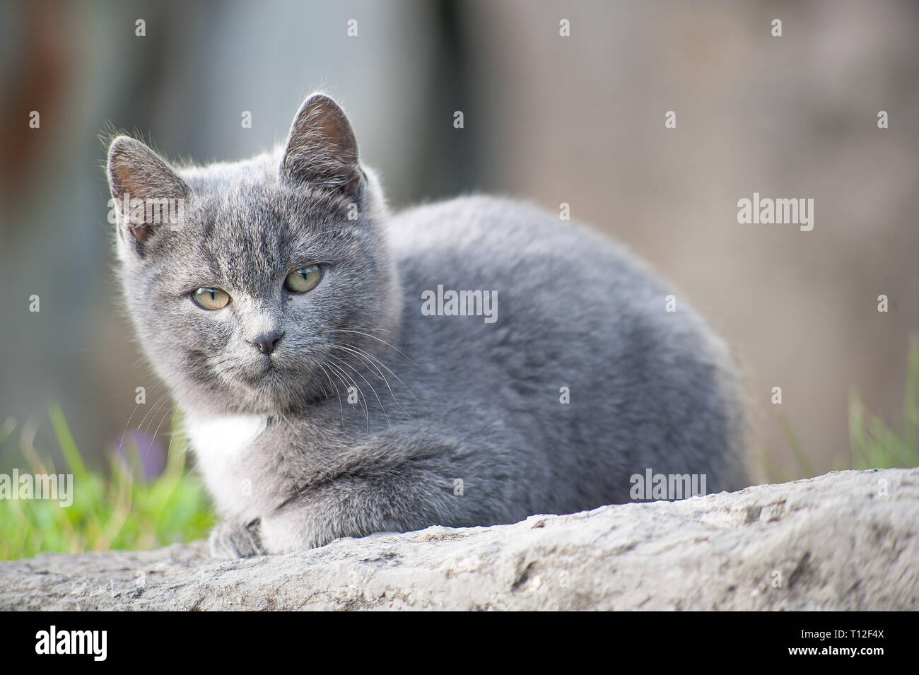 cat pup intrigued by the photographer - Stock Image