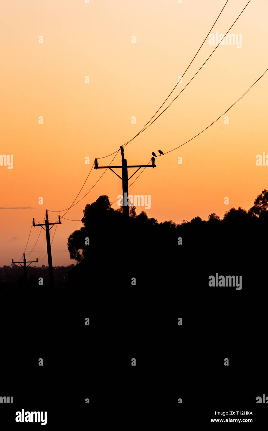 Two birds sitting on telephone line cable. - Stock Image