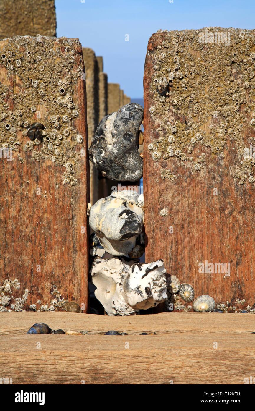 Flints wedged between breakwater posts on a North Norfolk beach at Bacton-on-Sea, Norfolk, England, United Kingdom, Europe. - Stock Image