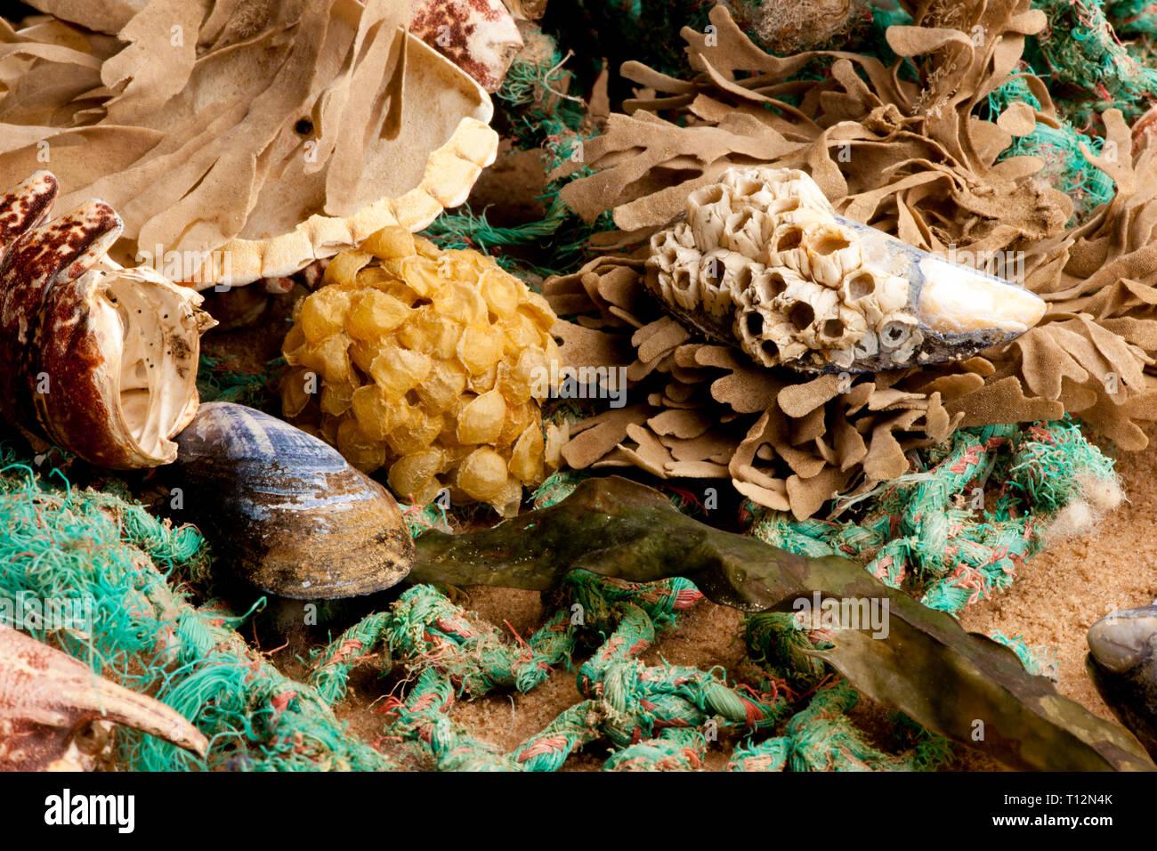 Flotsam and jetsam on a beach - Stock Image