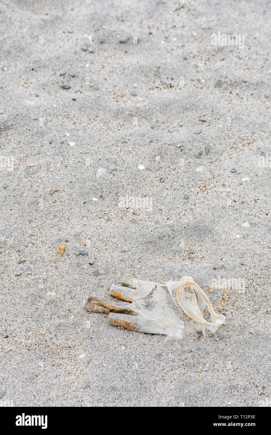 Latex plastic glove washed ashore on the tide. Metaphor for plastic pollution, sea pollution. - Stock Image