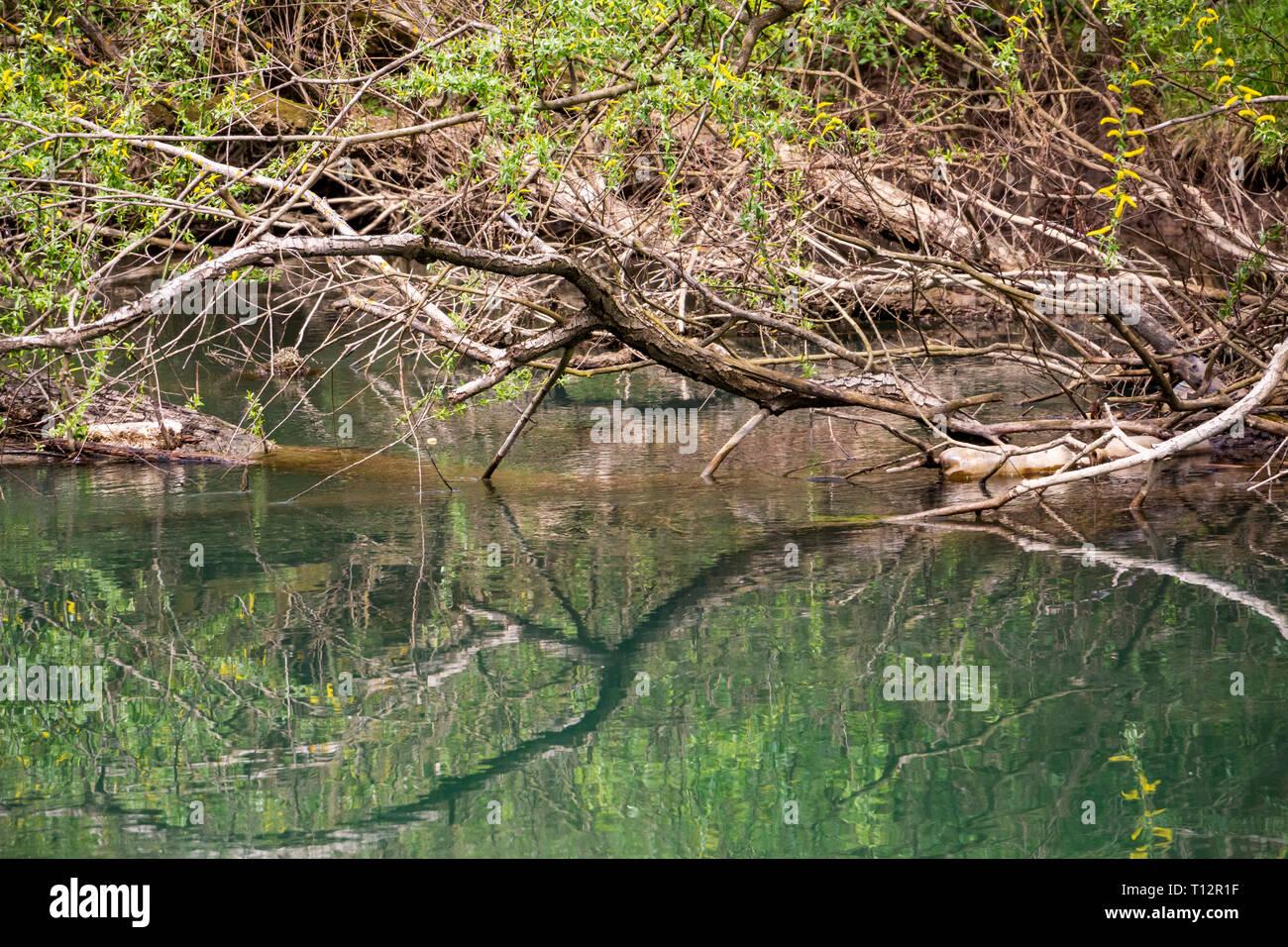 Dry branches reflections, fallen debris and plastic bottles, Zlatna Panega River surface at Iskar-Panega Eco-path Geopark, the first geopark in Bulgar - Stock Image