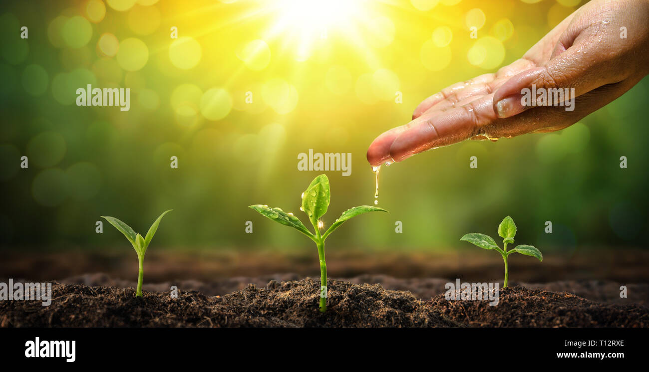 Woman hand watering to young plant natural background. Conservation of forest concept - Stock Image
