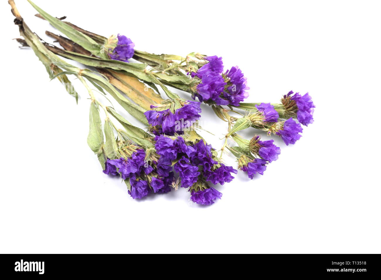 A bouquet of statice on a white background - Stock Image