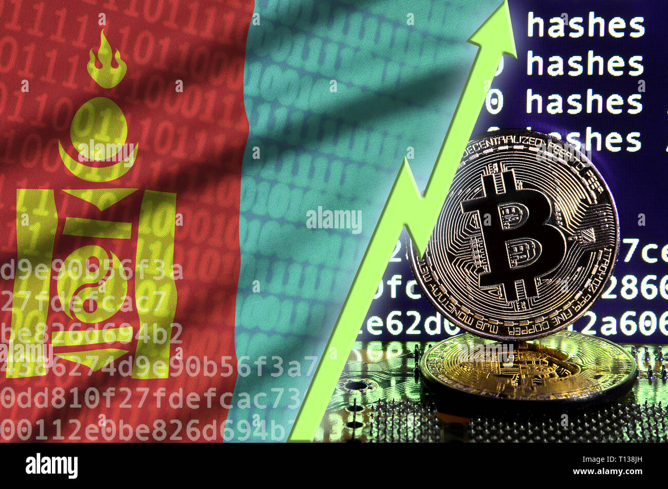 Mongolia flag and rising green arrow on bitcoin mining screen and two physical golden bitcoins. Concept of high conversion in cryptocurrency mining - Stock Image