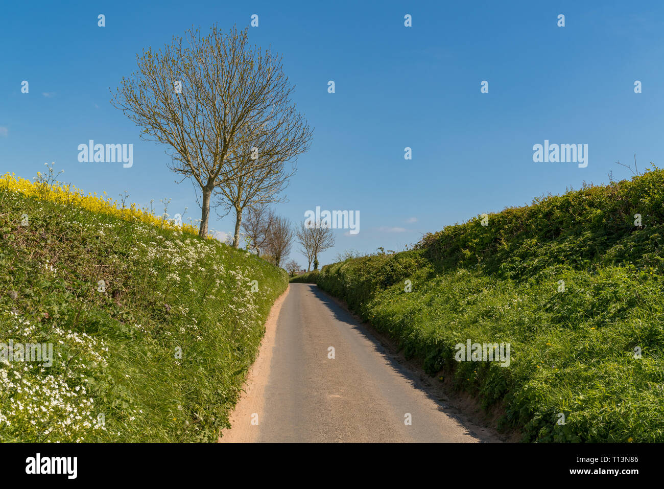 Rural One Way Road, surrounded by hedges, near Otterton, Jurassic Coast, Devon, UK - Stock Image