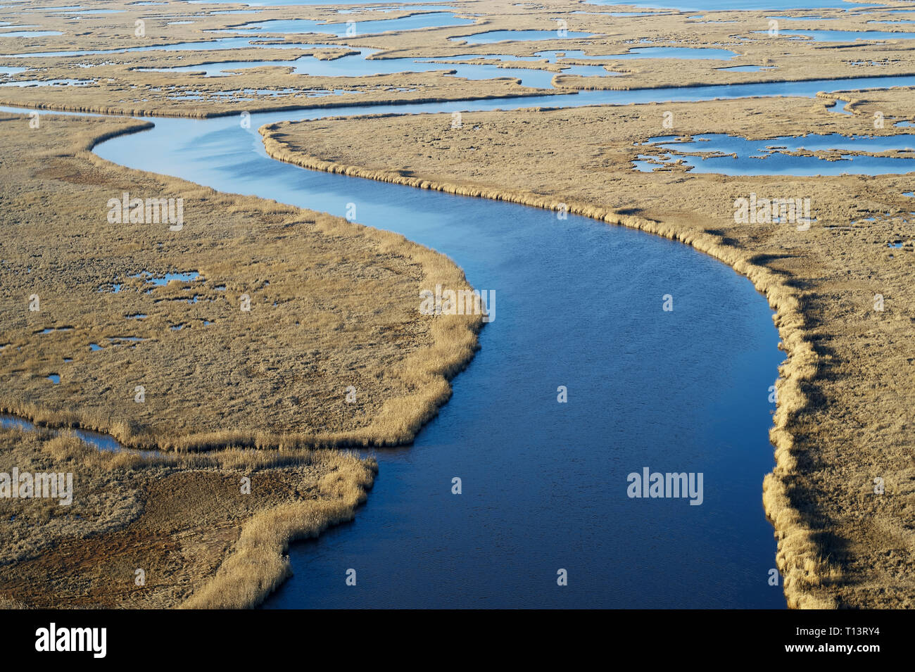 USA, Maryland, Cambridge, Blackwater National Wildlife Refuge, Blackwater River, Blackwater Refuge is experiencing sea level rise that is flooding thi - Stock Image