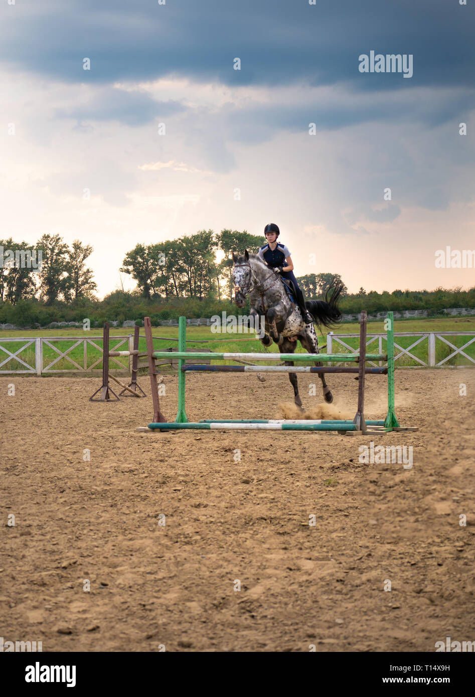 A woman jockey jumps over the barriers on a horse in a jumping competition during sunset. A young girl rider rides a horse riding in the saddle. Stock Photo