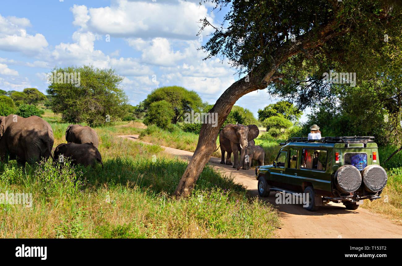 Safari Vehicle & Elephants - Stock Image
