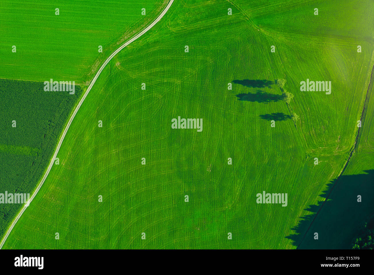 Germany, Chiemgau, Prien, field way and field in summer Stock Photo