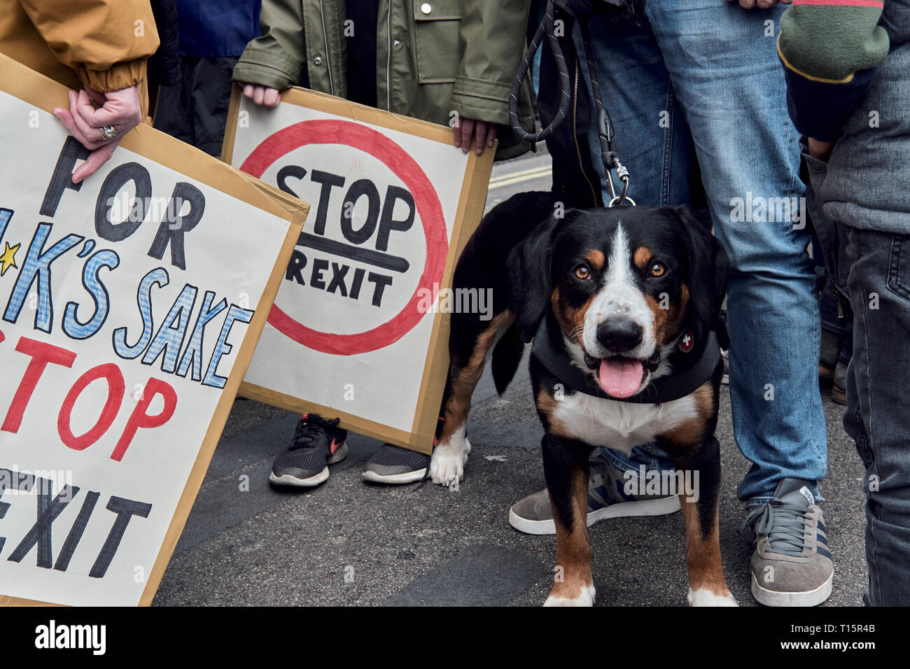 London, UK. 23rd Mar, 2019. Dog, during the protest with clidren holding signs Credit: Rokas Juozapavicius/Alamy Live News Stock Photo