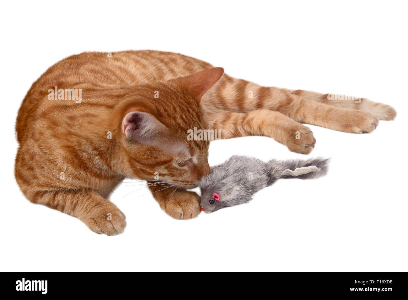 Ginger kitten laying and playing with a mouse toy Stock Photo