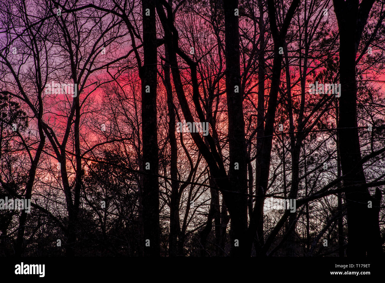 Colorful sunset with silhouettes of trees in the foreground - Stock Image