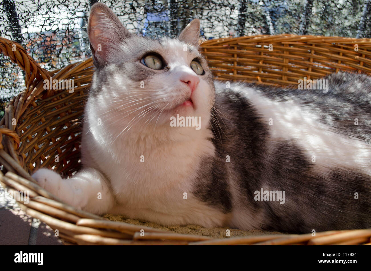 gatto Stock Photo