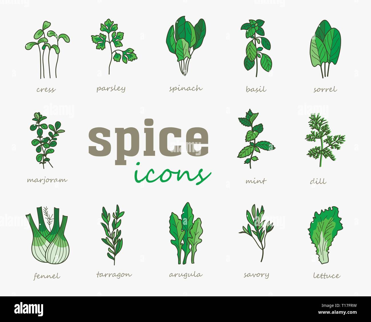 Greenery vector icon. Vegetable green leaves. Culinary herb spice for cooking, medical, gardening design. Organic product flavor ingredient for label, - Stock Vector