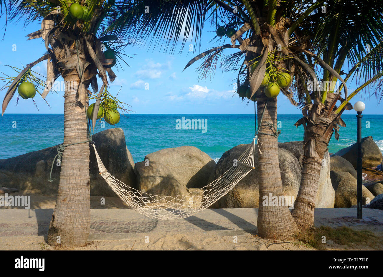 Hammock between to palm trees at Lamai Beach, Koh Samui, Gulf of Thailand, Thailand - Stock Image