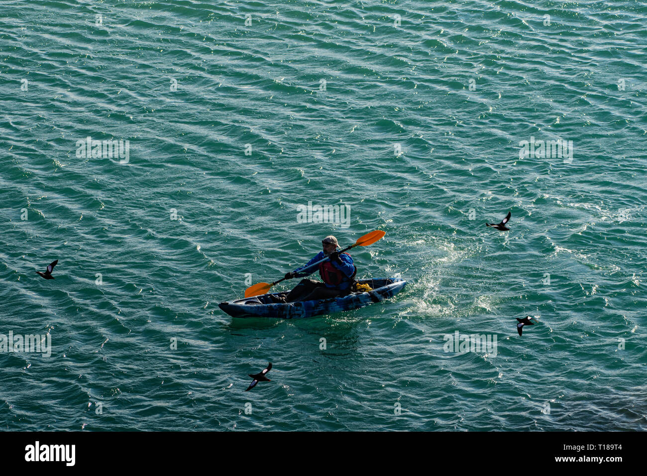 Bray Head, Ireland. 24th March, 2019 Kayaker enjoying calm, warm weather on his way from Greystones to Bray while guillemots are flying over him. Credit: Vitaliy Tuzov/Alamy Live News Stock Photo