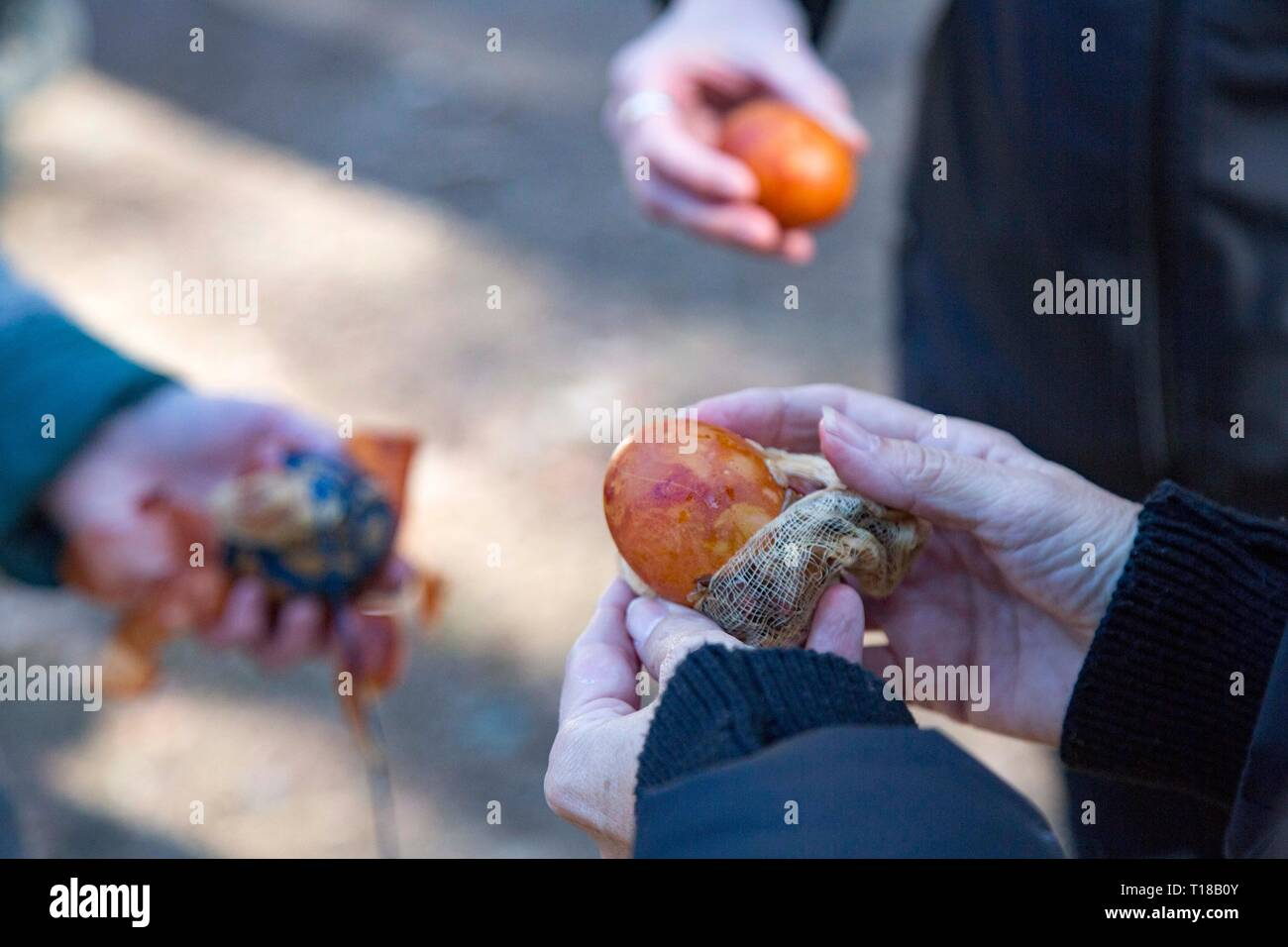 Riga, Latvia. 24th Mar, 2019. Dyed eggs are seen during the celebration of spring equinox at the Ethnographic Open-Air Museum of Latvia, in Riga, Latvia, on March 24, 2019. People celebrated spring equinox here with outdoor performances and traditional activities including egg dyeing and swinging on Sunday. Credit: Edijs Palens/Xinhua/Alamy Live News - Stock Image