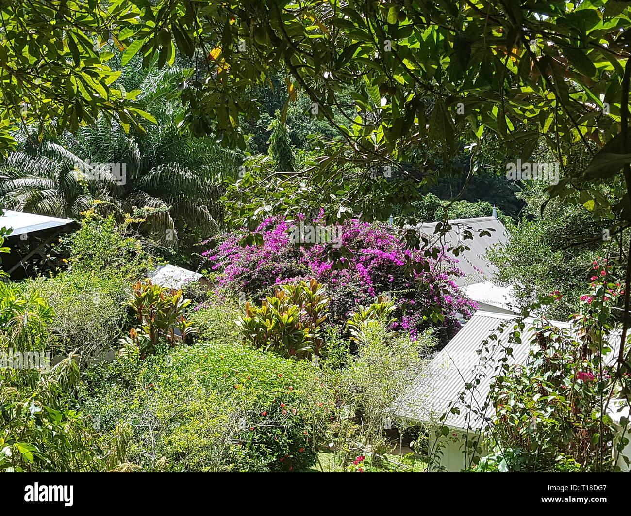 Pink flowers in the spice garden Jardin Du Roi on the Seychelles island Mahe Stock Photo