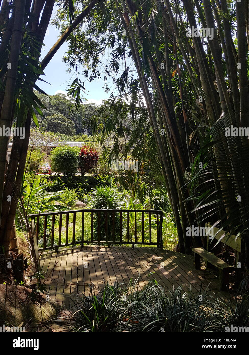 Bamboo and a fence in Jardin Du Roi at the Seychelles Stock Photo