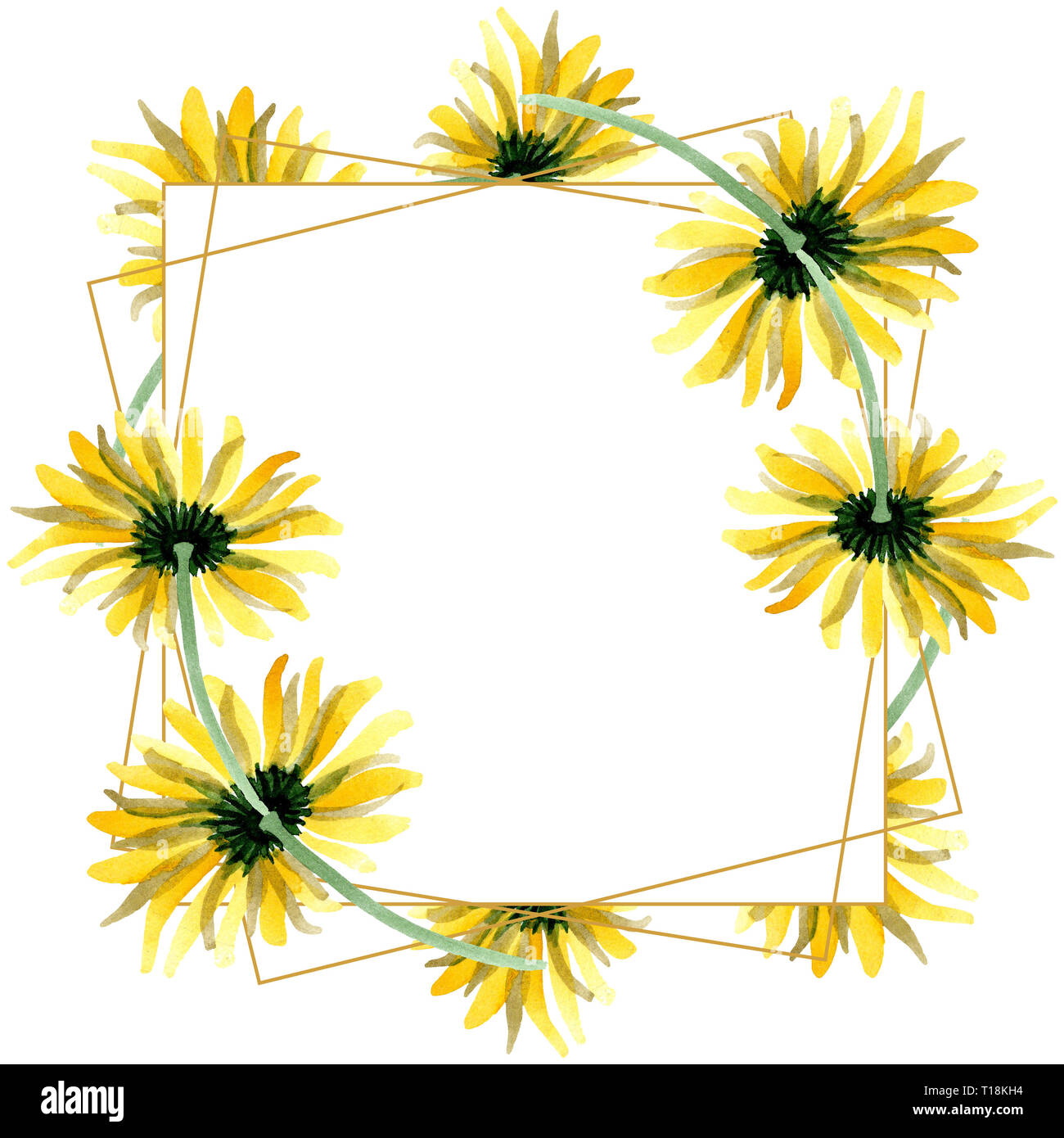 yellow daisy floral botanical flowers watercolor background illustration set frame border crystal ornament square stock photo alamy https www alamy com yellow daisy floral botanical flowers watercolor background illustration set frame border crystal ornament square image241750800 html