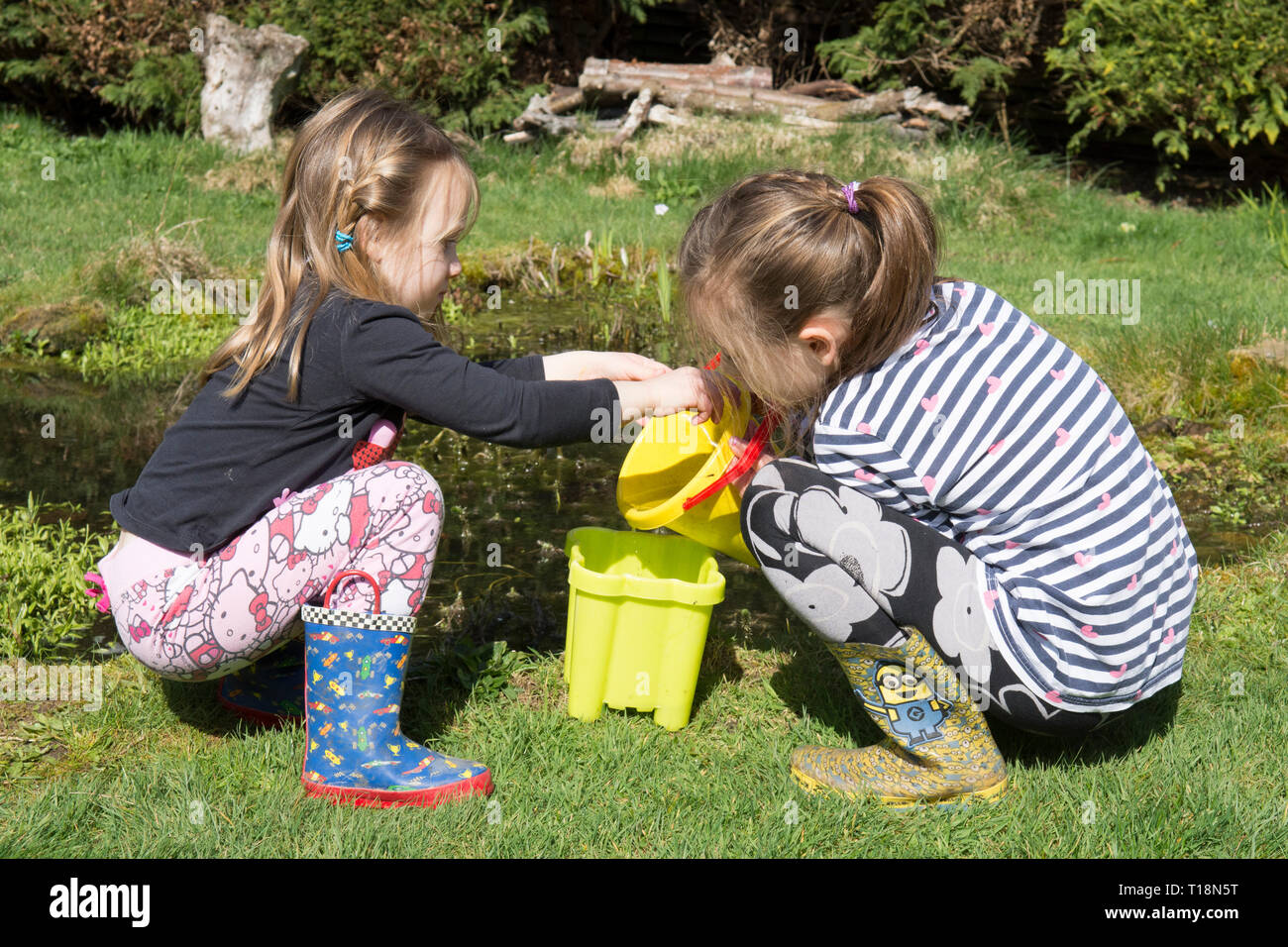 two young girls pond dipping in garden wildlife pond removing tadpoles in children's bucket, sisters, three and seven years old. UK. March. Stock Photo
