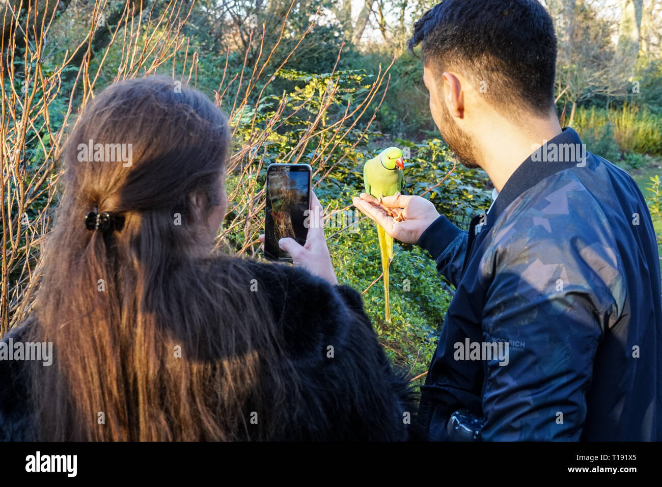 People hand feeding parakeets in St James's Park, London England United Kingdom UK Stock Photo