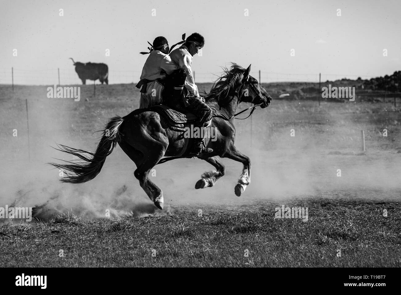 Horse and two riders at an Obo Nadam festival horseriding show at  the Gegentala grasslands north of Hohhot in Inner Mongolia, China. - Stock Image