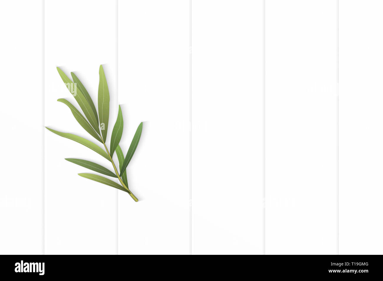 Flat lay top view elegant white composition tarragon leaf on wooden floor background. Stock Photo