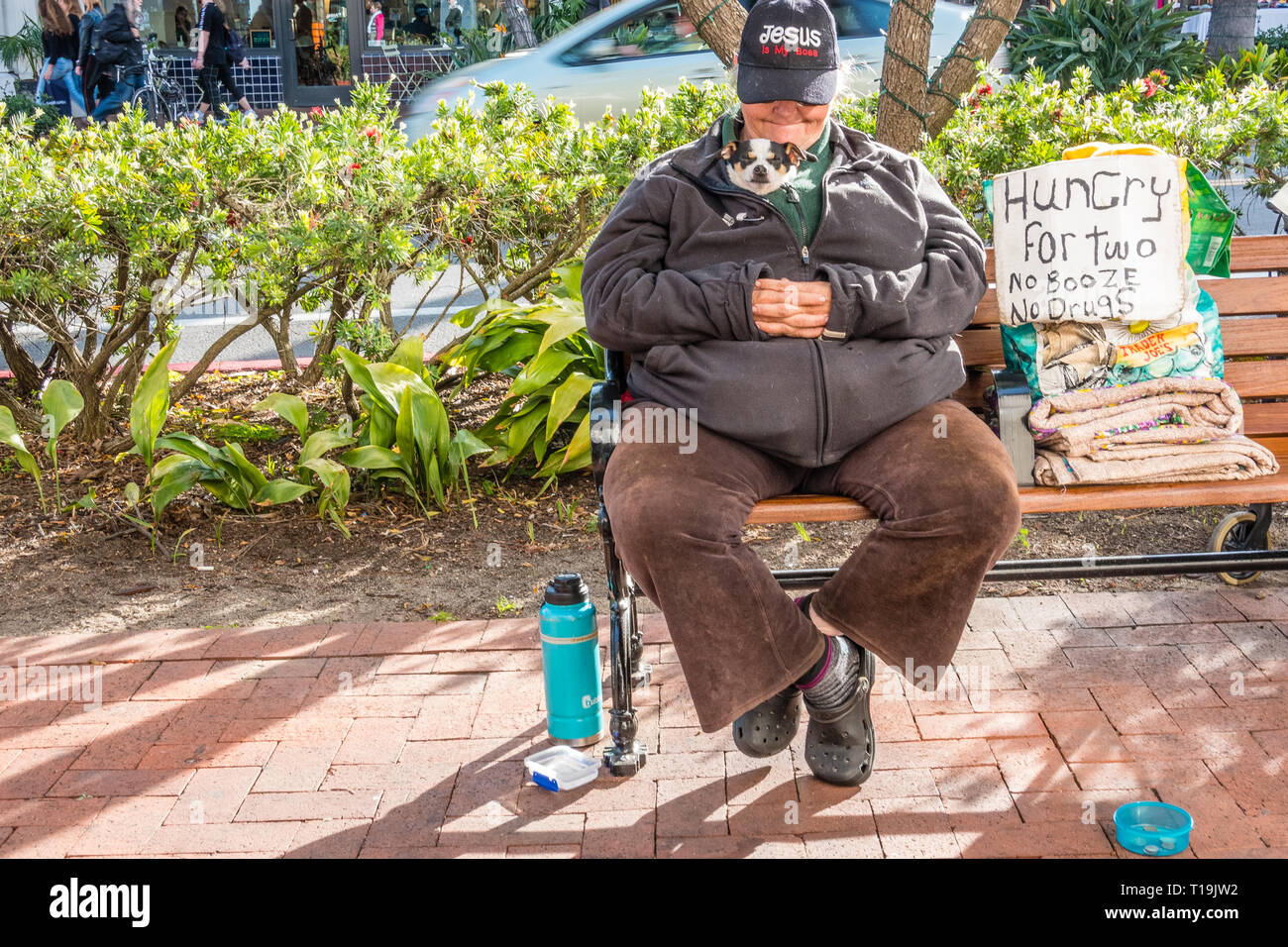 A female senior citizen beggar, with her tiny dog wrapped up close to her chest in her clothes,  sits on a city bench with a begging sign in late afte - Stock Image
